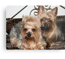 Two Spoiled Dogs Metal Print
