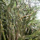 Enchanted Hawthorn tree. by Amanda Gazidis