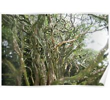 Enchanted Hawthorn tree. Poster