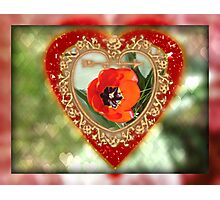 Tulip Valentine Photographic Print