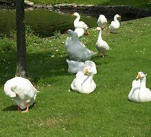 Swan Family by Glenn Esau
