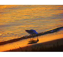 Beach Gull Photographic Print