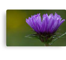 Sheer Purple Canvas Print