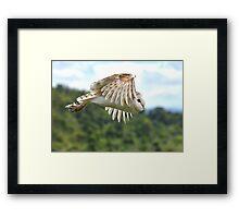 flying owl Framed Print