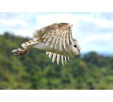 flying owl Photographic Print