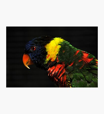 Lorikeet Photographic Print