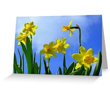 Narcissus in Sunshine Greeting Card