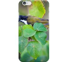 The Blue-faced honeyeater iPhone Case/Skin