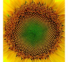 Sunflower Center Photographic Print