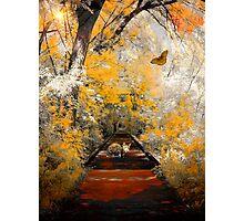 The Pathway To Autumn Photographic Print