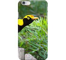 The Regent Bowerbird iPhone Case/Skin