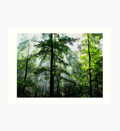 Light Beams In The Morning Wilderness Art Print