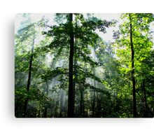 Light Beams In The Morning Wilderness Canvas Print