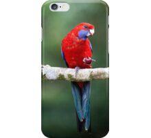 Crimson rosella - nr iPhone Case/Skin