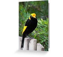 The Regent Bowerbird - bi Greeting Card