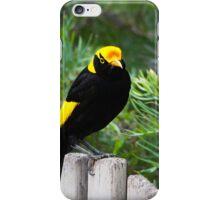 The Regent Bowerbird - bi iPhone Case/Skin