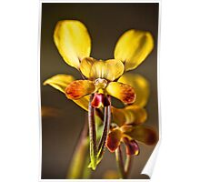 Donkey Orchids Poster