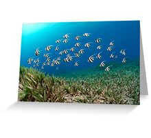 Youngsters Greeting Card