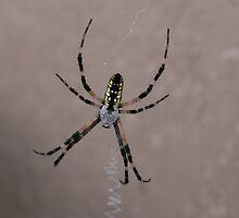Spider by KBdigital