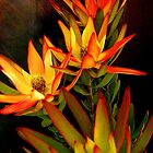 RED DEVIL PROTEA by the6tees