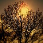 SUN TREE by the6tees