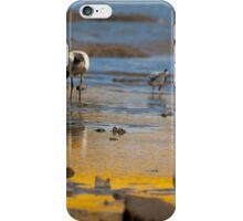White-faced Heron - jc iPhone Case/Skin