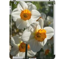 Sunny Side Up - Daffodils Blooming in a Fabulous Spring Garden iPad Case/Skin