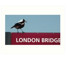 Magpie on London Bridge Art Print
