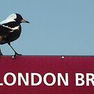 Magpie on London Bridge by Roz McQuillan