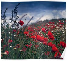 Filed of poppies Poster