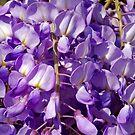Purple petals by Arie Koene
