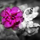 Alone in Colour by Ashli Zis