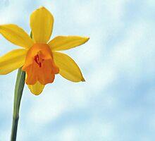 Daffodil in the snow by Arie Koene