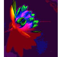 Water lily abstract pop art Photographic Print