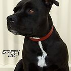 Staffy and Proud by amanda metalcat dodds