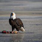 I see you wild bald eagle by Eti Reid