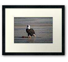 I see you wild bald eagle Framed Print
