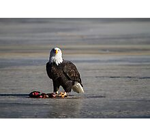 I see you wild bald eagle Photographic Print