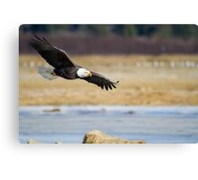 Watch out bald eagle Canvas Print