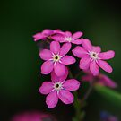 Forget me, nots by natureloving