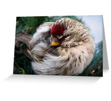 Ball of Feathers Greeting Card