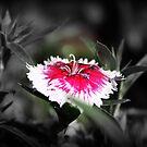 Fairy Floss by Ashli Zis