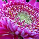 Shades of Lilac by Kathie Nichols