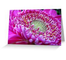 Shades of Lilac Greeting Card