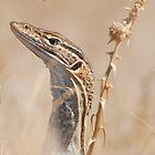 Sand Monitor (Varanus flavirufus) by Peter Ellen