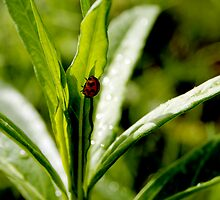 ladybird, ladybird by Bronwen Hyde