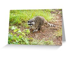 What hole? Racoon Greeting Card