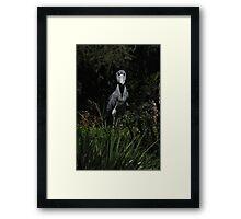 Shoe Billed Stork 1 Framed Print