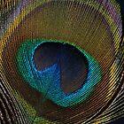 Peacock Allure by Debbie Stobbart
