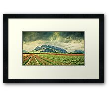 Tulip fields on a stormy day Framed Print